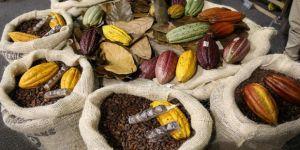 Kolombiya'da çikolata ve kakao fuarı: Chocoshow