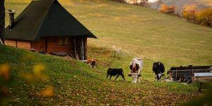 Çiftçilerin 'boynuzlu inek' talebi reddedildi