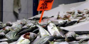 Balık çeşitliliği yüz güldürüyor