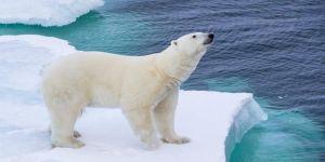 Kuzey Kutbu tarihinin en sıcak 5 yılını geçirdi