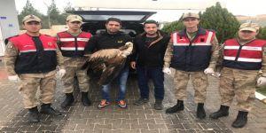Jandarmanın yaralı halde bulduğu akbaba tedavi altına alındı