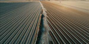 Tarım ihracatı 5 yılda 107 milyar doları aştı