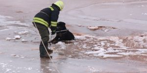 Donmakta olan köpek son anda kurtarıldı