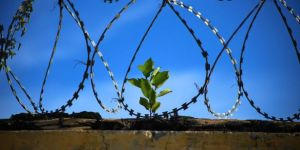 Çin'de 'elit' yolsuzluk mahkumlarına 'ayrıcalıklı' hapishane