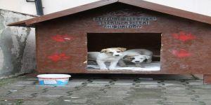 Esenyurt Belediyesinden sokak hayvanlarına sıcak yuva