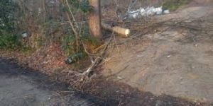 Kestiği ağaçla birlikte yere düşen kişi ağır yaralandı