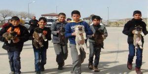 Sokaktaki yavru köpeklere öğrenciler ve öğretmenler sahip çıktı