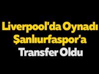 Liverpool'da Oynadı Şanlıurfaspor'a Transfer Oldu