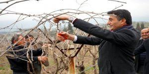 Başkan Selçuk Üzüm Bağlarında İşçilerle Buluştu