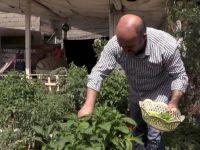 Bahçesi Olmayan Vatandaş Sebze ve Meyve Yetiştiriyor