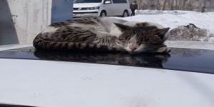 Türkiye'nin En Soğuk İlçesinde Güneş Yüzünü Gösterdi