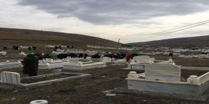Iğdır'da Ölüler Bayramı Nedeniyle Mezarlık Ziyaretleri Yapıldı
