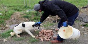 Büyükçekmece Belediyesi, Sokak Hayvanlarını Unutmuyor