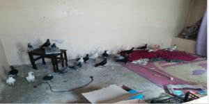 Güvercin Çalan Hırsızlık Şüphelileri Yakalandı