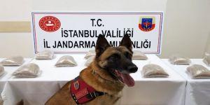 Jandarma Köpeği 'Atak'tan Zehir Tacirlerine Darbe