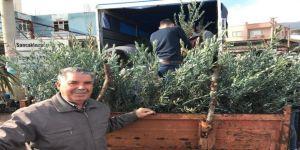 Şehzadeler Ziraat Odası'ndan Üreticilere 35 Bin Zeytin Fidanı