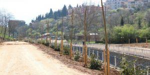 Cımbızdere Vadisi'nde 11 Bin 400 Metrekarelik Alan Ağaçlandırıldı