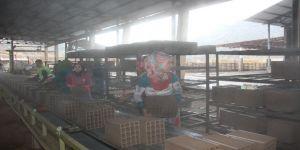 Tuğla Fabrikası Açıldı