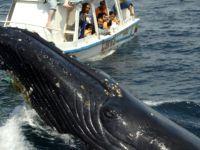 Balinalar İçin Seyir Turu Yapan Tekne Battı: 4 Ölü
