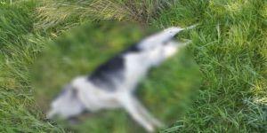 Çeşme'de Sahipli İki Köpeğin Öldürülmesine Tepki