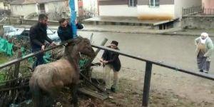 Mahsur Kalan Atı Vatandaşlar Kurtardı