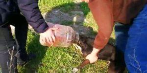 Kafası Bidona Sıkışan Köpeği Vatandaşlar Kurtardı