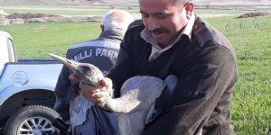 Yaralı Turna tedavi edilip doğaya salındı