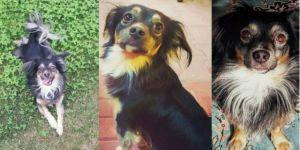 Kaybolan Ve Özel Halk Otobüsüne Binen Köpeğini Arıyor