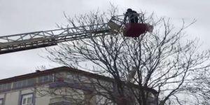 Ağaçta Mahsur Kalan Güvercini İtfaiye Kurtardı