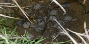 Su Kuyusunda Mahsur Kalan 17 Kaplumbağa Ölmek Üzereyken Kurtarıldı
