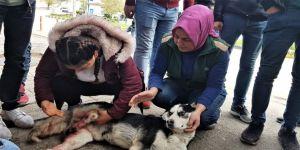 Otomobili İle Çarptığı Köpeğin Başında Dakikalarca Bekledi