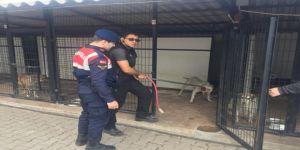 Hayvan Barınağından Köpek Çalan 3 Şüpheli Yakalandı