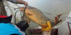 Kaçak avda kullanılan bin metre ağ ile 400 kilo balık ele geçirildi