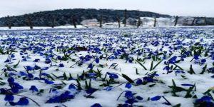 Mor Yayla Beyaza Büründü, Mavi Yıldızlar Kar Altında Kaldı