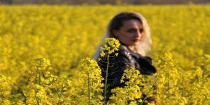 Trakya'nın Yeni 'Sarı Gelini' Kanola