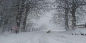 Baharda Gelen Kar Yağışı Sürücülere Zor Anlar Yaşattı