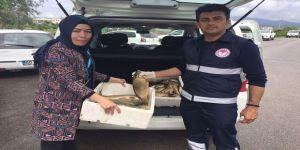 Osmaniye'de Kaçak Avlanan Balık Ve Ağ Ele Geçirildi