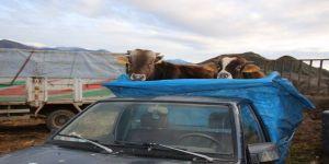 Canlı Hayvan pazarında satışlar durma noktasında
