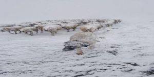 Koyun sürüsüne Nisan ayında kar sürprizi