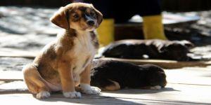 10 bine yakın kedi-köpek koruma altına alındı