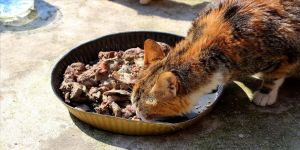 Kedilere yarım ton ciğer dağıtıldı