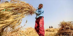 En fazla çocuk işçi, tarım sektöründe