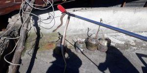 Evin çatısındaki yılan paniğe neden oldu