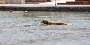 Sevimli köpeğin deniz keyfi