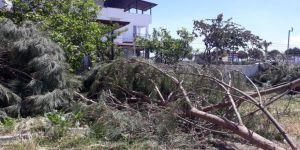 Ören'de Ağaç Katliamı
