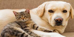 Detaylarıyla Kedi Köpek Bakımı Nasıl Olmalıdır?