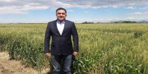 Doğru: Buğdayın maliyeti bir yılda yüzde 55 arttı