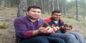 Altın Değerinde Mantar: Kuzugöbeği