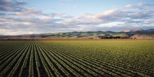 Tarım- ÜFE Nisan ayında yüzde 1,09 arttı
