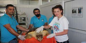 Tedavisi tamamlanan kaplumbağayı denize bıraktı
